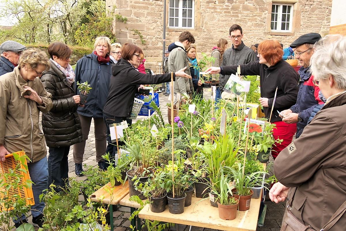 Hobbygärtner und Pflanzenfreunde treffen sich am 28. April wieder in Borgentreich.